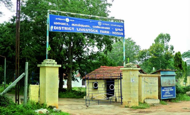 District livestock farm in Hosur where the cricket ground was developed by Lt Col T. Murari.—DC