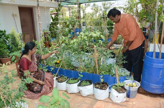 Chennai First Blog Archive Taking Gardening To Great For Terrace Vegetable Garden India