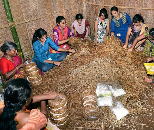 Chennai first 2015 march mushroom cultivation by enactus ethiraj project agaricus at ethiraj college for women photo kv solutioingenieria Image collections