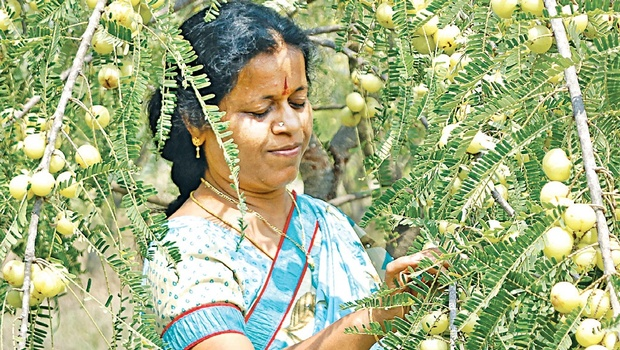 Anuradha Balaji at her farm in Thiruvallur district D Sampath Kumar