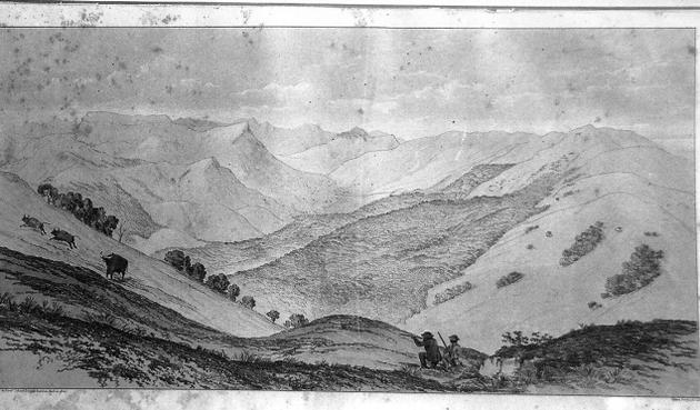 Boundary ridge dividing the Pulnis from Travancore. (Note the gaur on the left, that are being targeted)