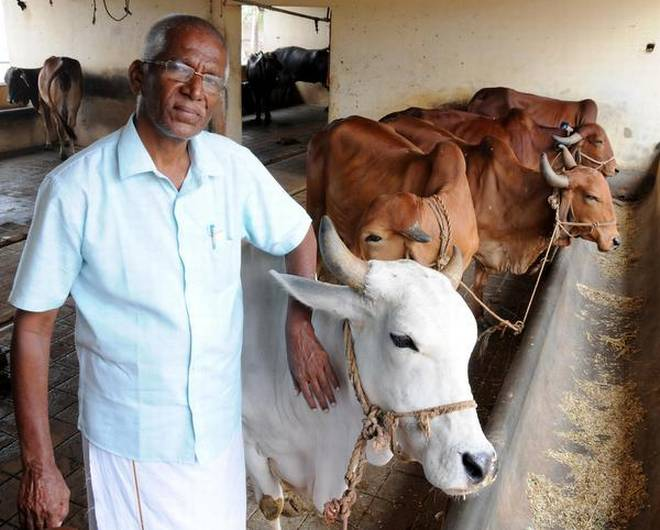 At the cattle shed in P. Chellandipalayam, Karur district. Photo: S. Siva Saravanan